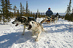 Young members of the Vuntut Gwitchin First Nation use dogsleds as one of their main modes of winter transportation in Old Crow, Yukon Territory, Canada.