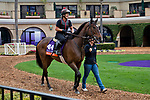 DEL MAR, CA - OCTOBER 29: War Flag, owned by Joseph Allen, LLC and trained by Claude R. McGaughey III, walks the paddock in preparation for Breeders' Cup Filly & Mare Turf at Del Mar Thoroughbred Club on October 29, 2017 in Del Mar, California. (Photo by Jesse Caris/Eclipse Sportswire/Breeders Cup)