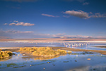 Andean and Chilean flamingos, Eduardo Avaroa National Andean Fauna Reserve, Bolivia