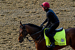 LOUISVILLE, KY - MAY 03: Mendelssohn, trained by Aidan O'Brien, exercises in preparation for the Kentucky Derby at Churchill Downs on May 3, 2018 in Louisville, Kentucky. (Photo by John Vorhees/Eclipse Sportswire/Getty Images)