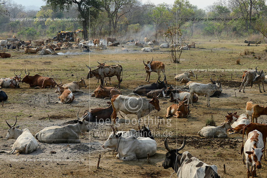 ETHIOPIA Gambela, cattle camp with cows / AETHIOPIEN Gambela, Lagerplatz von Viehhirten mit ihren Kuehen