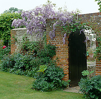 Wisteria grows over the brick wall of this walled garden, contrasting with the rich green shrubbery which runs along the bottom of the wall