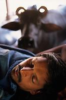 INDIA Mumbai, urban agriculture, stable with buffalos for milk production in living area in suburban Andheri, milk men live and sleep in stable/ INDIEN Mumbai, urbane Landwirtschaft, im Stadteil Andheri befinden sich Bueffelstaelle in Wohngebieten, nach dem Melken wird die frische Milch direkt verkauft