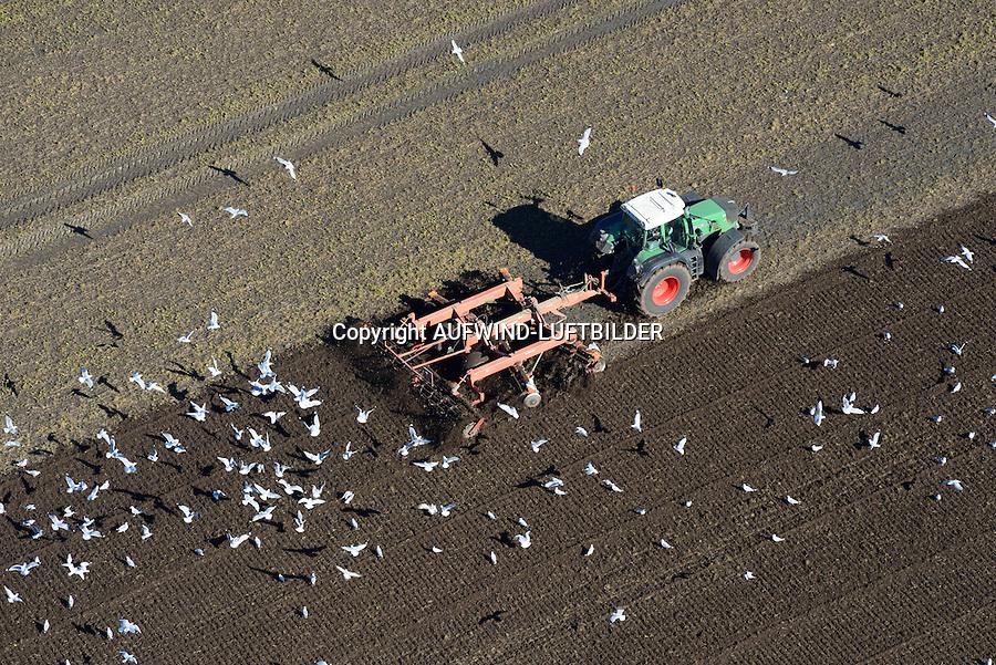 Feldarbeit mit Trecker: EUROPA, DEUTSCHLAND, NIEDERSACHSEN,  (GERMANY), 12.03.2014: Bauer eggt mit seinem Treckerein Feld, Moewen suchen und finden viel Futter.