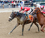 Cairo Cat  (no. 7) wins Race 4 Aug. 11, 2018 at the Saratoga Race Course, Saratoga Springs, NY.  Ridden by David Cohen, and trained by Kenneth McPeek,  Cairo Cat finished a head in front of Teachable Moment (no. 8).  (Bruce Dudek/Eclipse Sportswire)