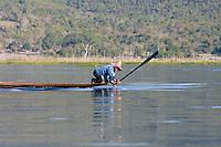 Myanmar, Burma.  Fisherman Slapping the Water with his Paddle to Stun Fish.  Inle Lake, Shan State.