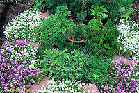 HS35-009a  Herb garden paths - Alyssum flowers, Lobularia maritima, herbs -sage, parsley, rosemary, thyme, dill, basil, marjoram, chives