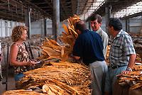 The Sale 2, (l to r) Sue O'Donnell, Phil Hando (BATA), Rob Edgeley (BATA) and Peter Soda (TLMB), Mareeba Sales Floor, Mareeba, 2003.