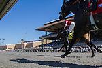 AUG 15,2014:Kickback of horses on the polytrack at Del Mar in Del Mar,CA. Kazushi Ishida/ESW/CSM