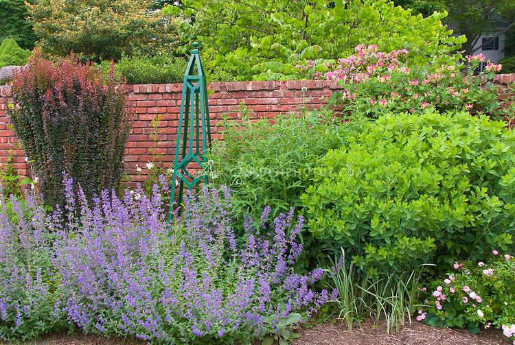 Garden scene of Nepeta, Berberis thunbergii barberry, Obelisk, Baptisia, Lonicera honeysuckle vine, roses, etc in summer