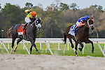 OLDSMAR, FLORIDA - MARCH 12: Destin #7, ridden by jockey Javier Castellano, down the stretch, where he eventually breaks the track record, and wins the Lambholm South Tampa Bay Day Derby at Tampa Bay Downs on March 12, 2016 in Oldsmar, Florida (photo by Doug DeFelice/Eclipse Sportswire/Getty Images)