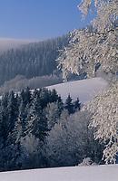 Europe/Allemagne/Forêt Noire/Env de Hinterzarten : Paysage rural en hiver