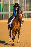 LOUISVILLE, KY - MAY 01: Rayya with dana Barnes up gallops in preparation for the Kentucky Oaks at Churchill Downs on May 1, 2018 in Louisville, Kentucky. (Photo by Alex Evers/Eclipse Sportswire/Getty Images)