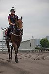 SHA TIN,HONG KONG-APRIL 27: Buffering  ,trained by Robert Heathcote,exercises in preparation for the Chairman's Sprint Prize at Sha Tin Racecourse on April 27,2016 in Sha Tin,New Territories,Hong Kong (Photo by Kaz Ishida/Eclipse Sportswire/Getty Images)
