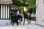 August 15, 2021, Deauville (France) -  Stable area at the Deauville Racecourse. Two horses arriving before the races. [Copyright (c) Sandra Scherning/Eclipse Sportswire)]