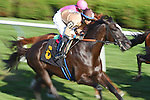 Scenes from around the track on Alabama Stakes day on August 22, 2015 at Saratoga Race Course in Saratoga Springs, New York. (Bob Mayberger/Eclipse Sportswire)