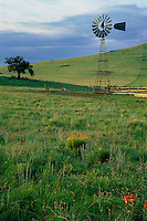 Windmill near Springville<br /> White Mountains<br /> Colorado Plateau<br /> Arizona