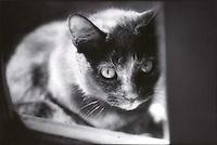 Cat seen through windowpane<br />