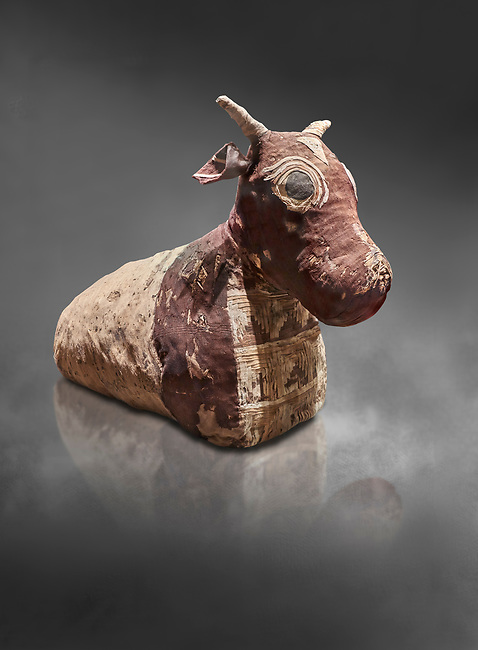 Ancient Egyptian pseudo mummy of a bull, painted linen, Late Period (722-332 BC. Egyptian Museum, Turin. Grey background<br /> <br /> The pseudo mummy contains only part of a bulls remains the missing parts being replaced with vegetable matter