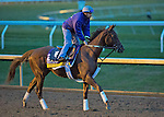 October 26, 2015 :   Sheer Drama, trained by David Fawkes and owned by Harold L. Queen Sr., exercises in preparation for the Longines Breeders' Cup Distaff at Keeneland Race Track in Lexington, Kentucky on October 26, 2015. Scott Serio/ESW/CSM