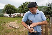 Europe/France/Aquitaine/64/Pyrénées-Atlantiques/les Aldudes : Pierre Oteiza éleveur de porcs basques,race  pie noir du pays basque , porcs élevés en liberté dans la vallée des Aldudes