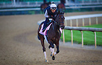 LOUISVILLE, KY - MAY 04: Lewis Bay gallops in preparation for the Kentucky Oaks at Churchill Downs on May 04, 2016 in Louisville, Kentucky. (Photo by Zoe Metz/Eclipse Sportswire/Getty Images)
