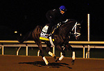 October 26, 2015:  Got Lucky (outside), trained by Todd Pletcher, and owned by Hill 'n' Dale Equine Holdings, and Philip Steinberg, is entered in the Breeder's Cup Longines Distaff Grade 1 $2,000,000.  Candice Chavez/ESW/CSM