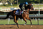 ARCADIA, CA  OCTOBER 26: Breeders' Cup Dirt Mile entrant Blue Chipper, trained by Kim Young Kwan, exercises in preparation for the Breeders' Cup World Championships at Santa Anita Park in Arcadia, California on October 26, 2019. (Photo by Casey Phillips/Eclipse Sportswire/CSM)