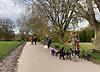 Lady walking dogs in Hampstead Heath, N London.<br /> <br /> Stock Photo by Paddy Bergin