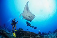 reef manta ray, Mobula alfredi, and scuba diver, Gan, Maradhoo, Addu Atoll, Maldives, Laccadive Sea or Lakshadweep Sea, Indian Ocean, MR