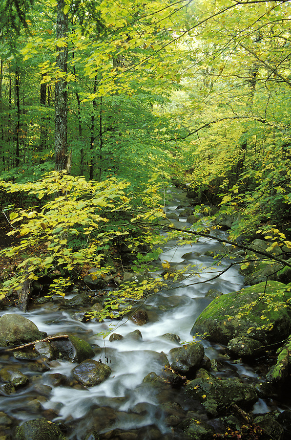 Squaw Brook flowing through autumn forest., Snowy Mountain Trail, near Indian River, Hamilton County, Adirondack State Park, NY