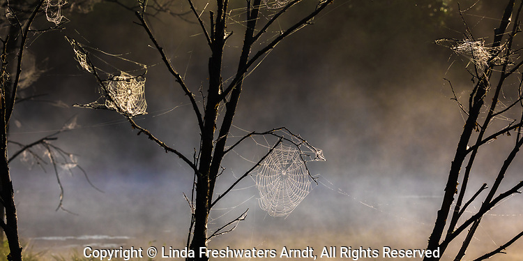 Dew-covered spider webs on a misty pond in northern Wisconsin.