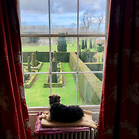 BNPS.co.uk (01202) 558833. <br /> Pic: Duke's/BNPS<br /> <br /> Pictured: Teddy the dog looks over the gardens of Wormington Grange. <br /> <br /> The lavish contents of one of Britain's most beautiful stately homes have sold for almost £2million after capturing high society's imagination.<br /> <br /> Over 1,600 items were auctioned off from Wormington Grange, a neoclassical mansion in the Cotswolds, during the hotly contested three-day sale.<br /> <br /> The sale included what the auctioneers described as the 'most important' collection of country house furniture to emerge on the market for decades.