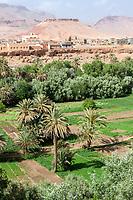 Tineghir, Morocco.  Palmeraie Oasis Scene.