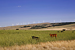 Wind farms dot the skyline near Goldendale, Washington, sharing the view with more traditional ranching.