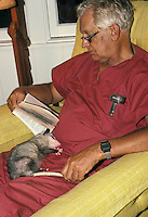 Possum sleeps in the lap of a man reading