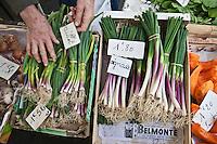 Europe/France/Aquitaine/40/Landes/Dax: Oignasse sur le marché, terme patois dans les Landes désignant la deuxième repousse de l'oignon. Appelé aussi cébars  dans les Pyrénées.