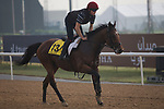 DUBAI,UNITED ARAB EMIRATES-MARCH 23: Cougar Mountain ,trained by Aidan O'Brien,exercises in preparation for the Dubai Turf at Meydan Racecourse on March 23,2017 in Dubai,United Arab Emirates (Photo by Kaz Ishida/Eclipse Sportswire/Getty Images)