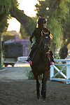 ARCADIA, CA  OCTOBER 30: Breeders' Cup Juvenile Fillies Turf entrant Shadn, trained by Andrew M. Balding, heads back to the barn after her workout at Santa Anita Park in Arcadia, California on October 30, 2019.  (Photo by Casey Phillips/Eclipse Sportswire/CSM)