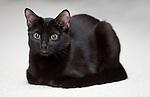 11.9.09 - Cocoa the kitten