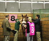 Saddling Preemptive Strike at the Meadowlands. 2005.