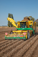 Four row self propelled potato havester - Lincolnshire; September