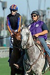 """ARCADIA, CA. SEPTEMEBER 29: #3 Beau Recall, ridden by Joseph Talamo, in the post parade of the Rodeo Drive Stakes (Grade l) """"Win and You're in Breeders Cup Juvenile Fillies Division"""" on September 29, 2018, at Santa Anita Park in Arcadia, CA. (Photo by Casey Phillips/Eclipse Sportswire/CSM)"""