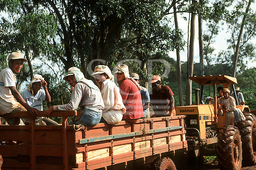 Parana State, Brazil. Day workers on a sugar plantation riding in a trailer.
