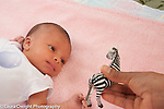 Newborn baby girl 12 days old vision focus looking at high contrast toy