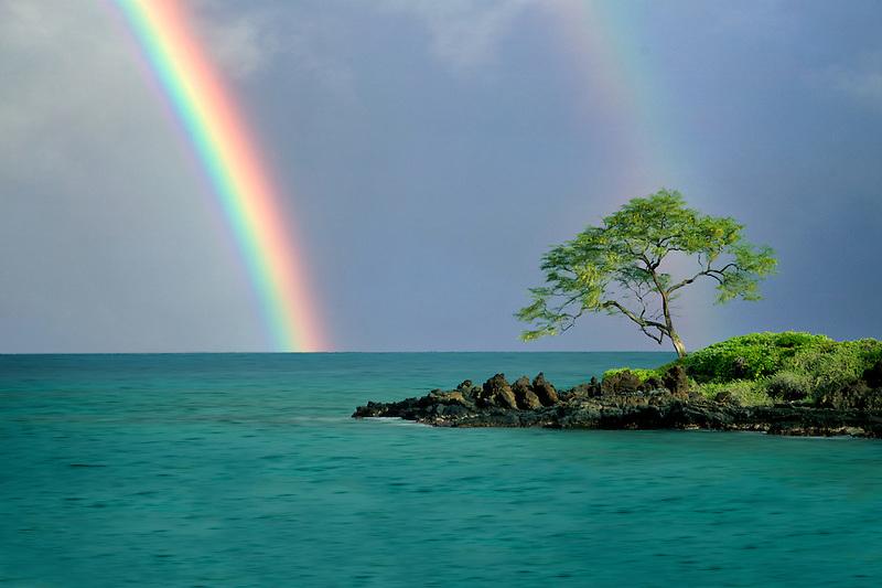 Lone tree and rainbow. Maui, Hawaii