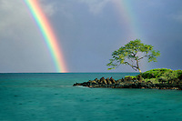 Lone tree and rainbow. Maui, Hawaii
