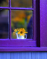 USA, Oregon, Looking through window of house at sunflowers in vase.