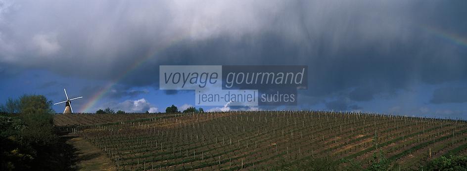 Europe/France/Pays de la Loire/49/Maine-et-Loire/Thouarcé: Le moulin de la Montagne et le vignoble AOC Côteaux du Layon