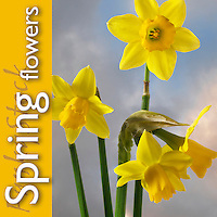 Spring Flowers | Pictures Photos Images & Fotos